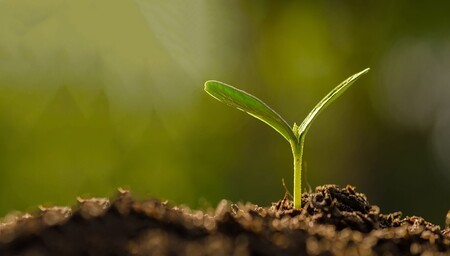 Appel à candidatures : 3e édition des Trophées de la bioéconomie (2020-2021)