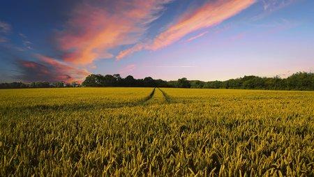 Vers une agriculture durable : expérimentation d'un nouveau système agricole et alimentaire en Région Occitanie