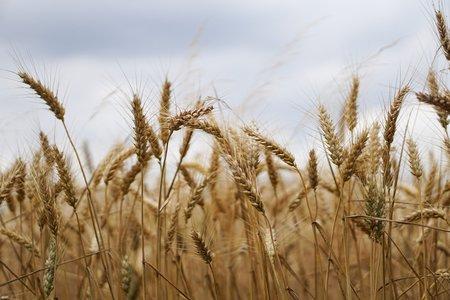 AAP en Bourgogne-Franche-Comté : Industrie Agro-Alimentaire